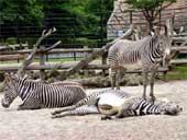 呉羽の動物園